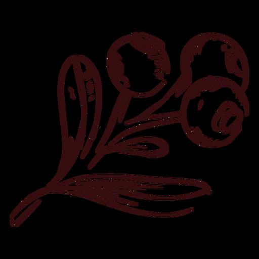 Thanksgiving cranberries branch hand drawn thanksgiving Transparent PNG