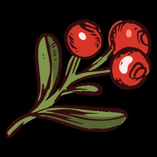 Thanksgiving cranberries branch illustration thanksgiving Transparent PNG
