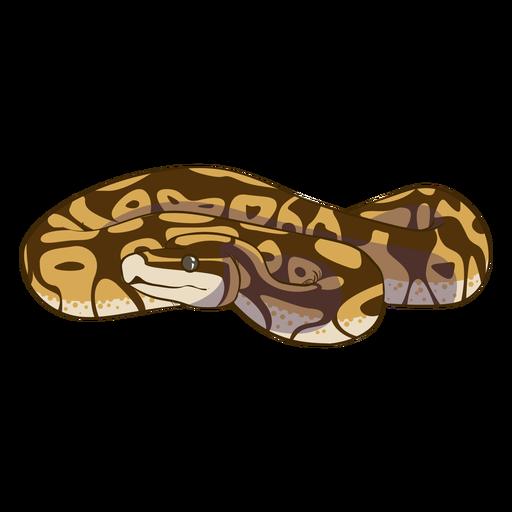 Cobra plana com vista frontal em espiral