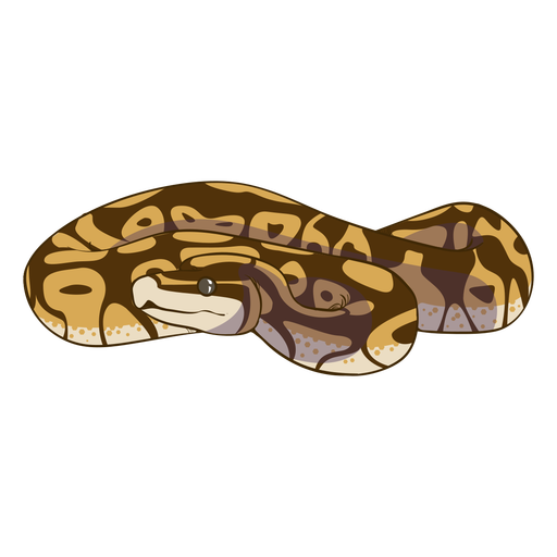 Coiled front view snake flat