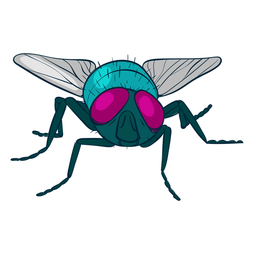 Colorful fly design illustration