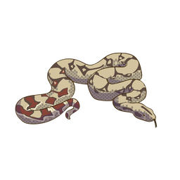 Desenho de animal cobra colorido