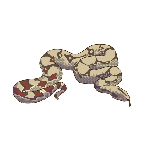Dise?o animal colorido serpiente