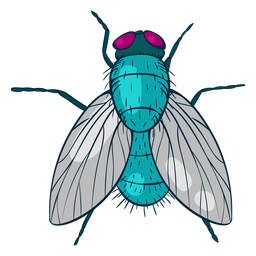 Colorful up view fly illustration