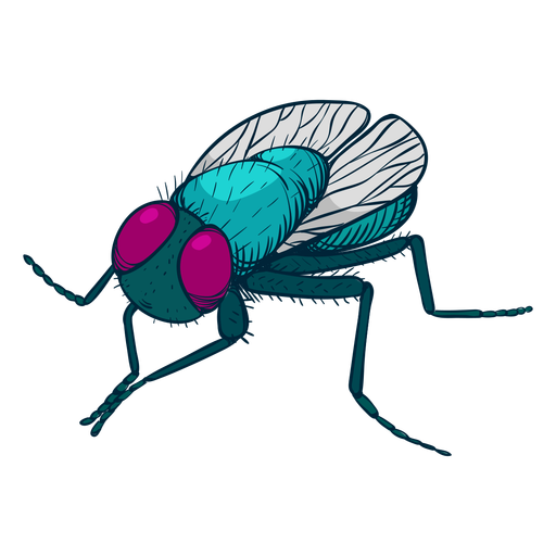 Fly colorful illustration