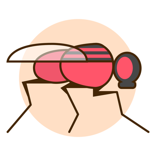 Fly insect icon