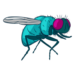 House fly illustration