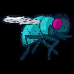 Ilustración de mosca doméstica