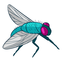 Side view fly illustration