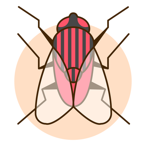 Up view fly icon illusttration