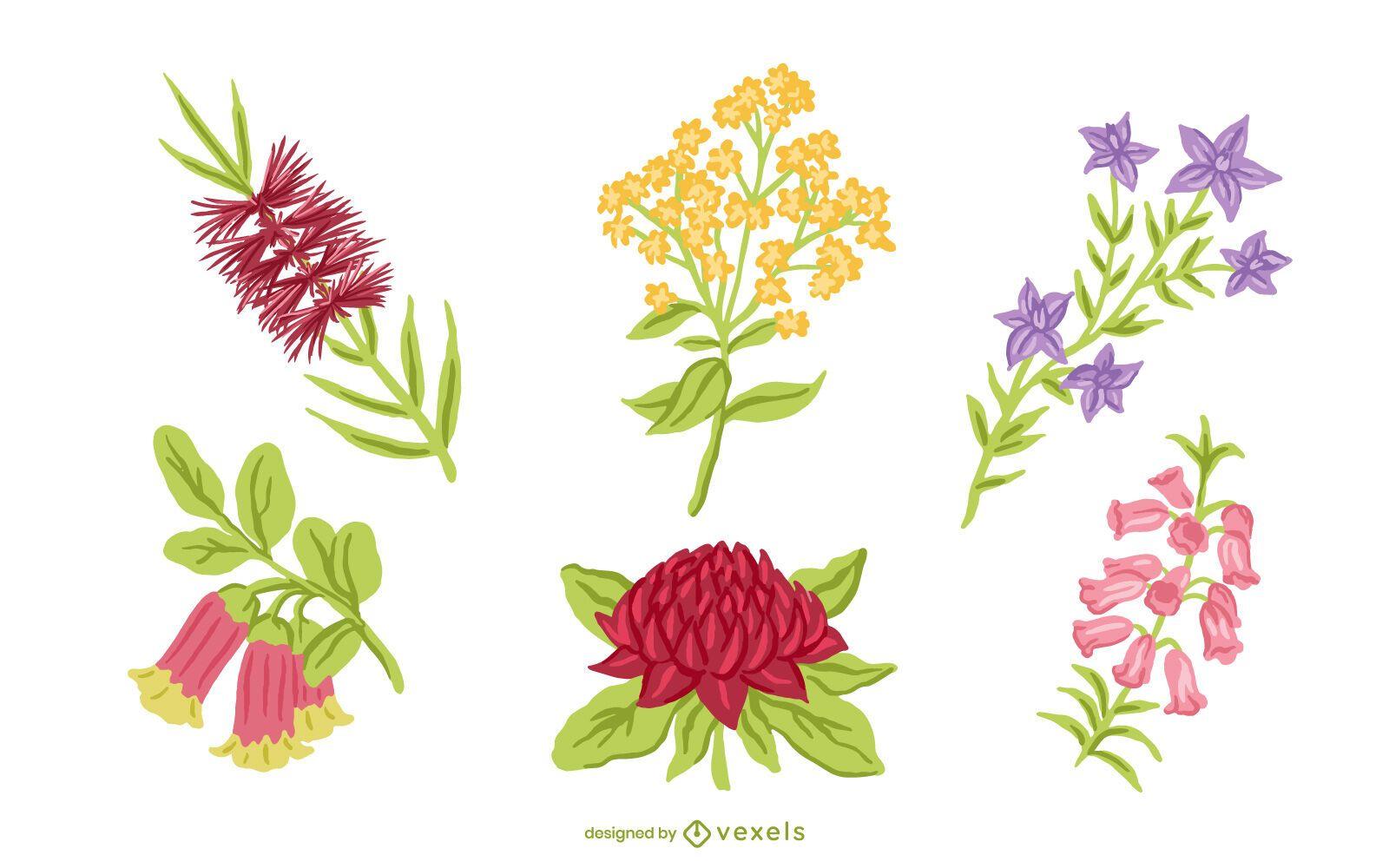 Australian native flower set design