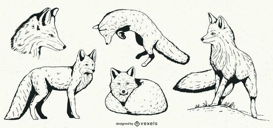 Hand drawn fox illustration set
