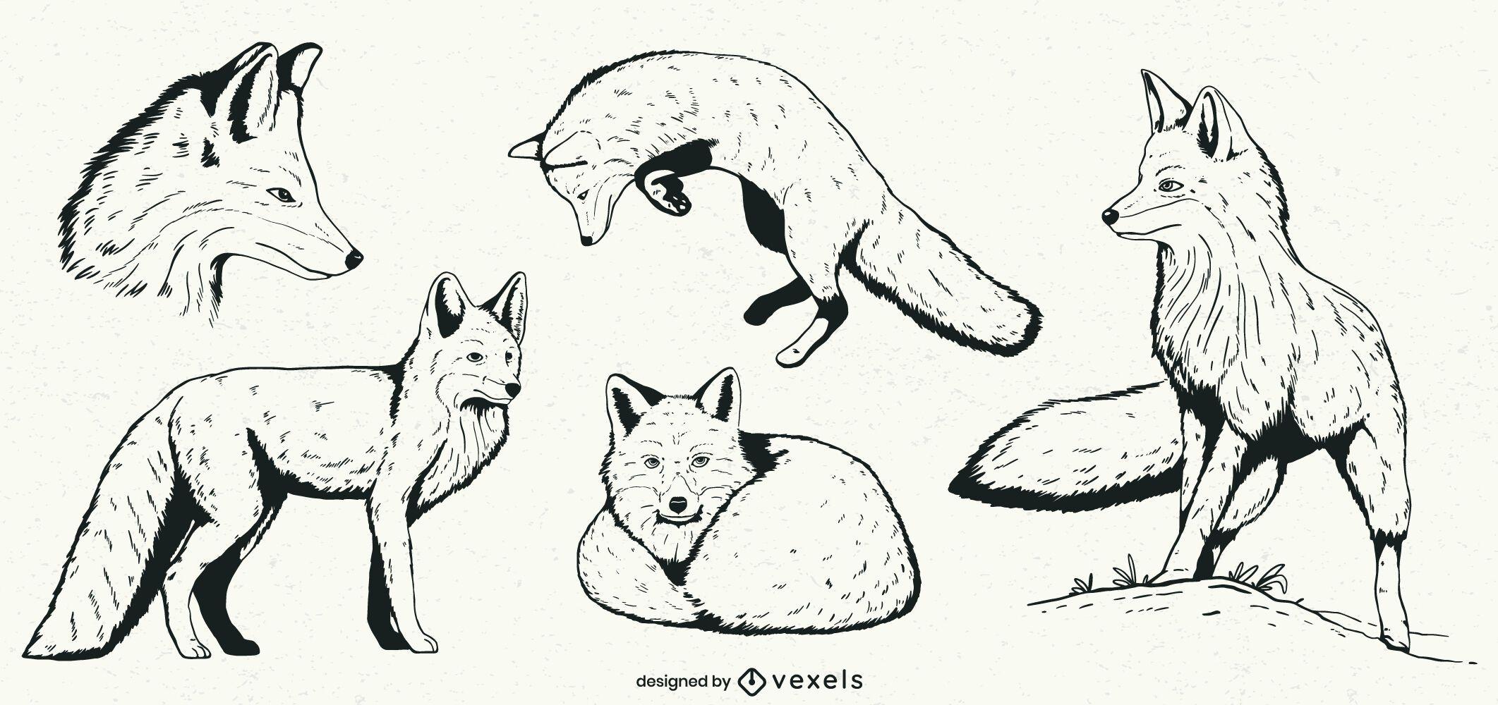 Conjunto de ilustração de raposa desenhada à mão