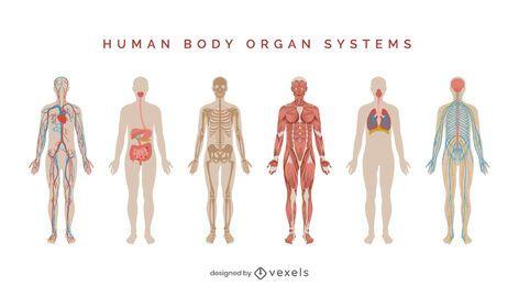 Conjunto de ilustração de sistemas do corpo humano