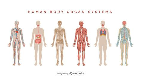 Human body systems illustration set