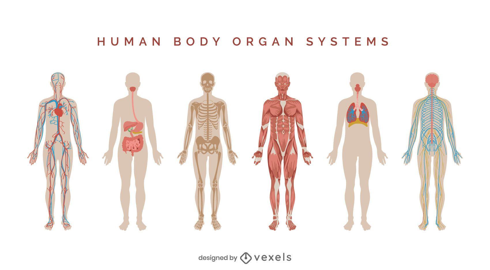 Conjunto de ilustración de sistemas del cuerpo humano