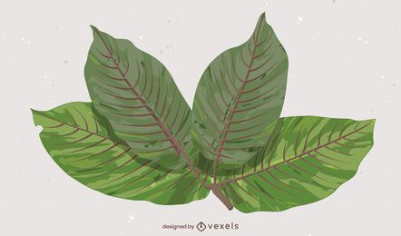 Kratom Leaves illustration