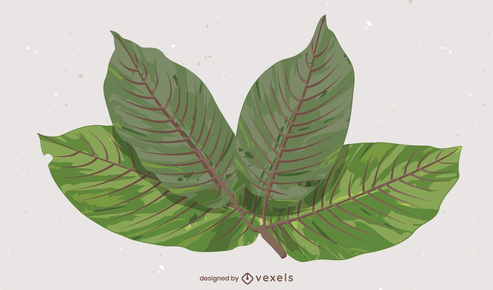Kratom Leaves illustration