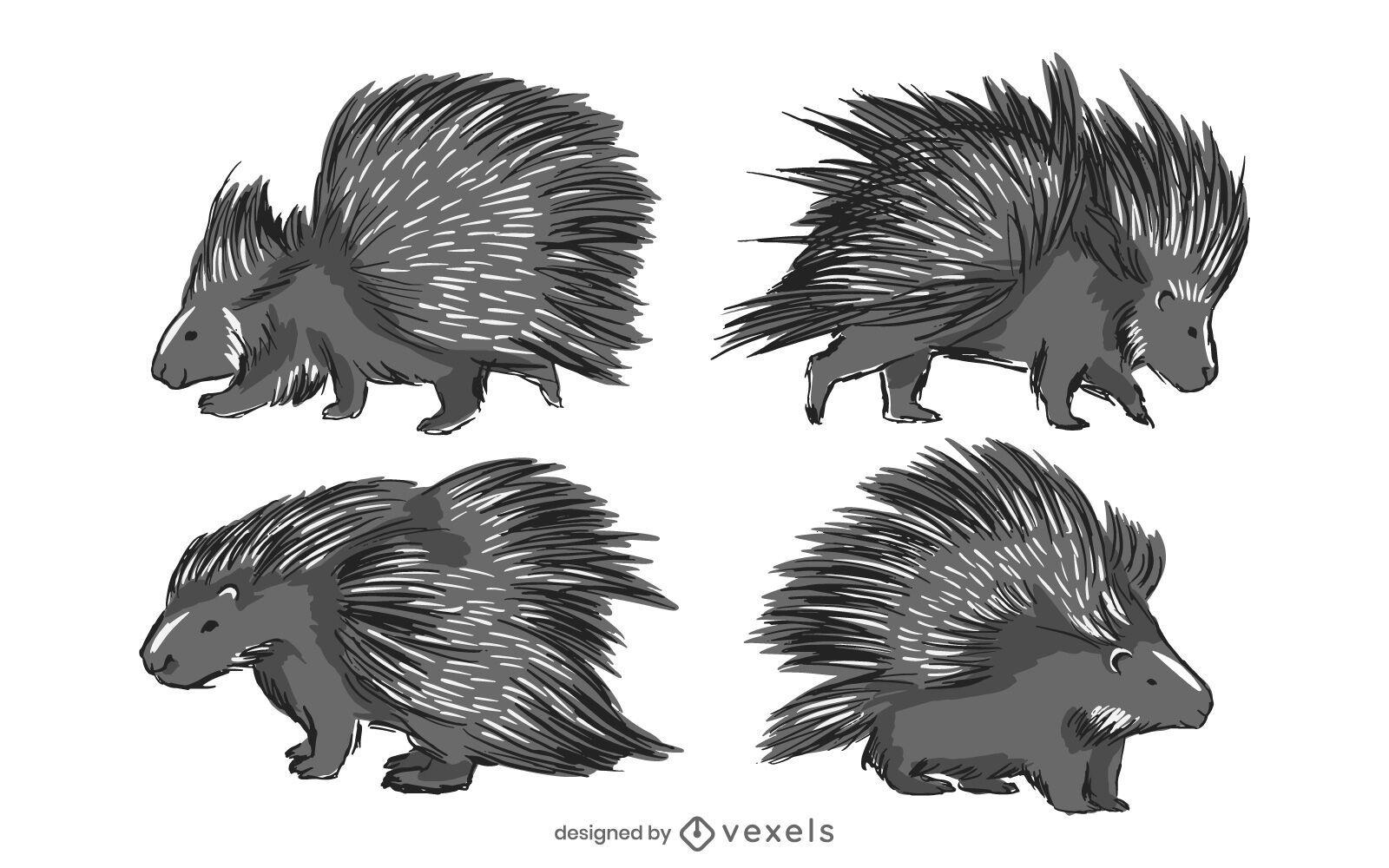 Porcupine illustration set