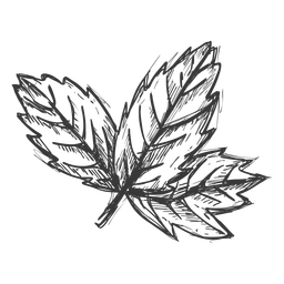 Maple leaf hand drawn