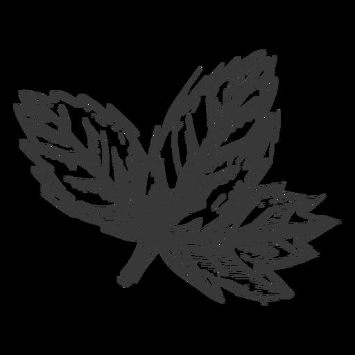 Maple leaf hand drawn Transparent PNG