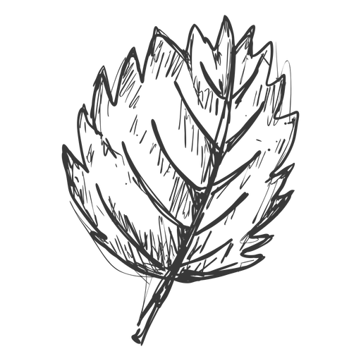 Single leaf hand drawn Transparent PNG