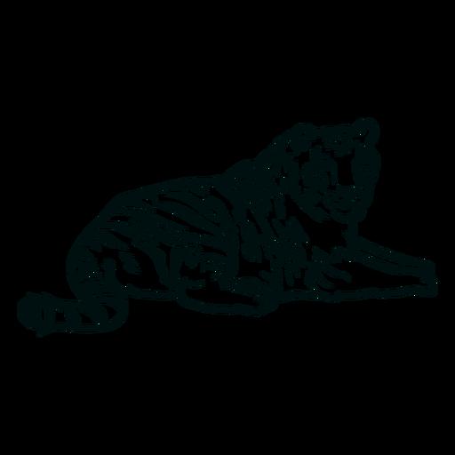 Tigre acostado golpe