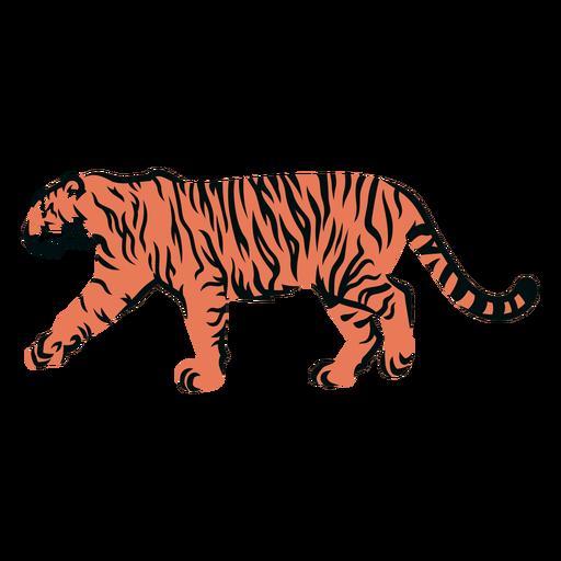 Tigre caminando lleno de trazo