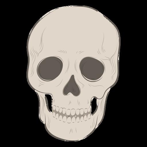 Front skull illustration