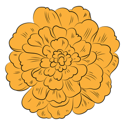 Dibujado a mano flor de caléndula