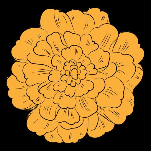 Marigold flower hand drawn