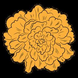 Orange marigold hand drawn