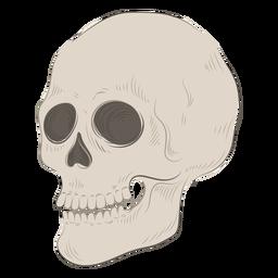Ilustración de cráneo esqueleto