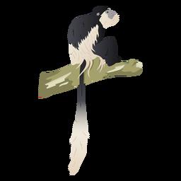 Ilustración de colobo blanco y negro
