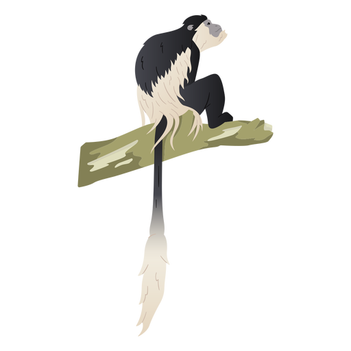 Black and white colobus illustration