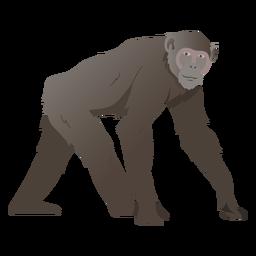 Chimpancé mono ilustración chimpancé