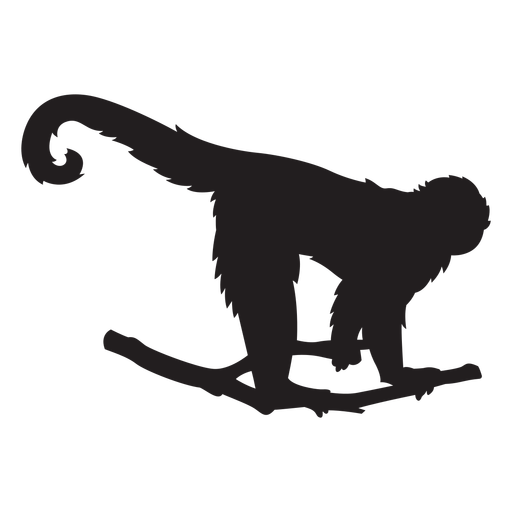 Silueta de capuchino de cara blanca colombiana