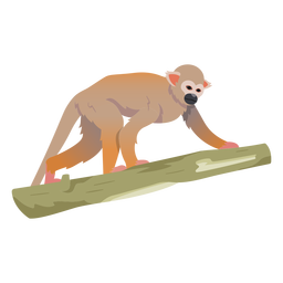 Common squirrel monkey illustration