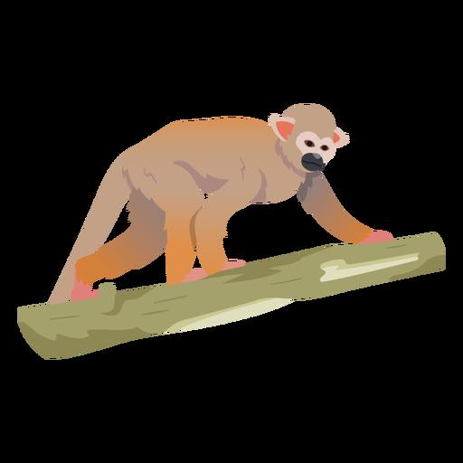 Common squirrel monkey illustration