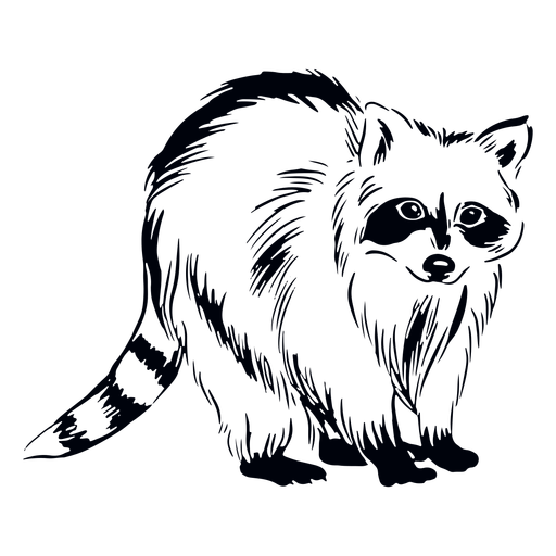 Cute raccoon hand drawn Transparent PNG