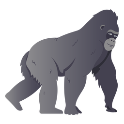 Gorilla monkey species illustration