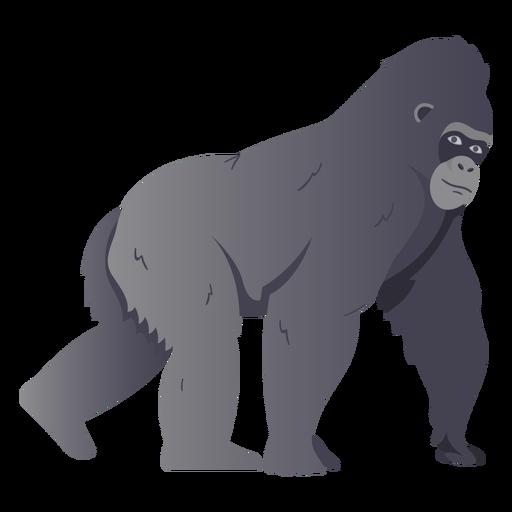 Ilustração de espécies de macaco gorila