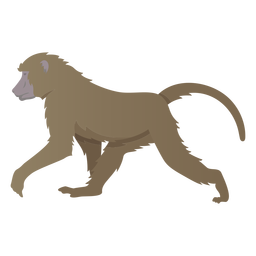 Guinea baboon illustration