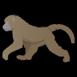 Ilustração de babuíno da Guiné