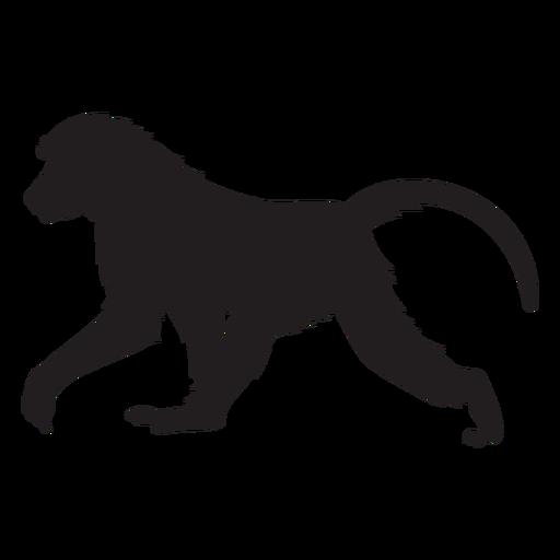 Guinea baboon silhouette