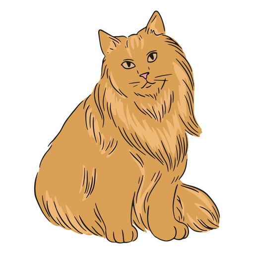 Maine coon fluffy illustration Transparent PNG