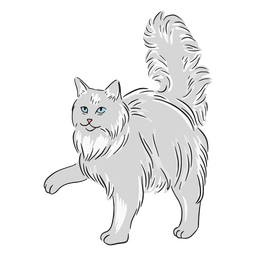 Maine coon paw illustration