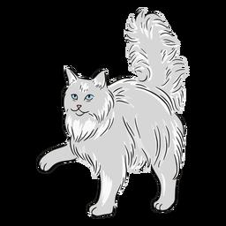 Maine coon paw illustration
