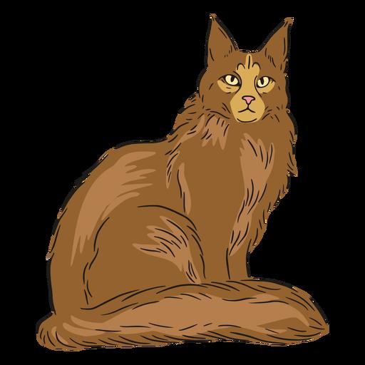 Maine coon sitting illustration