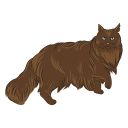 Maine coon walking illustration